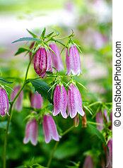 flor roxa, prado verde, sino