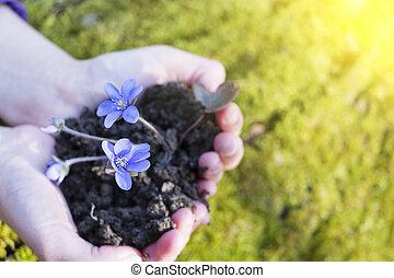 flor, roxo, concept., eco, sujo, segurar passa, suitable, homem