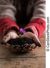 flor, roxo, solo, sujo, segurar passa, homem