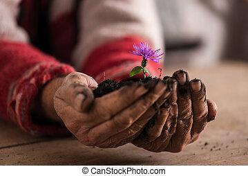 flor, roxo, sujo, segurar passa, homem