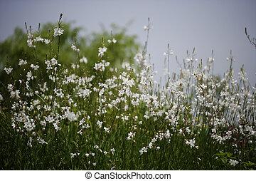 flor selvagem