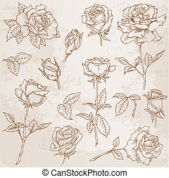 flor, set:, detalhado, mão, desenhado, rosas, em, vetorial