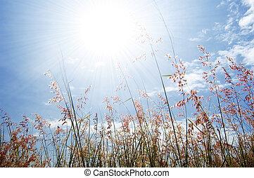 flor silvestre, pasto o césped, y, cielo