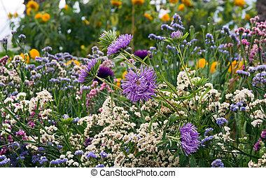 flor silvestre, pradera