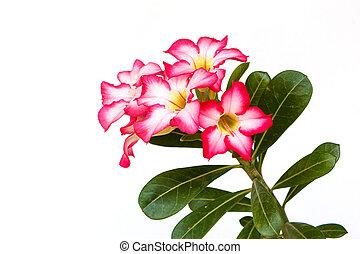 flor, simulado, azalea