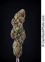 flor, sobre, strain), isolado, detalhe, cannabis, pretas,...