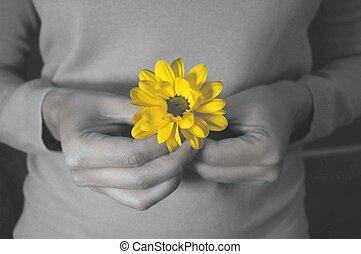 flor, tenencia, contra, mano, brillante, negro, fondo ...