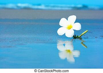flor tropical, en, el, beachv
