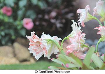 flor, variegou, natureza