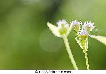 flor, verde, mala hierba, naturaleza