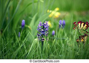flor, verde, pasto o césped