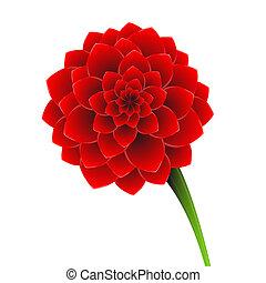 flor, vermelho