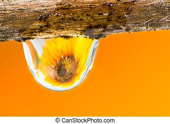 flor, y, gota de agua