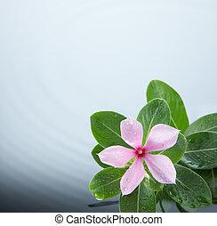 flor, y, ondulación del agua