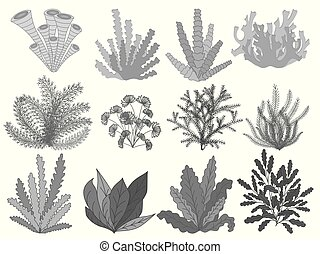 flora., 夏, 植物, 浜, 芸術, 隔離された, セット, ベクトル, 線, 手, 海草, 海洋, デザイン, 型, 引かれる, decorations., style., 黒, 葉, イラスト, コレクション, 白