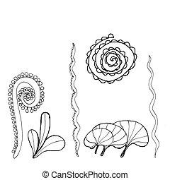 flora., 黒, 葉, セット, 植物, 海洋, コレクション, seaweed., 手, 引かれる, 白