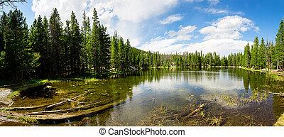 Flora and fauna of Rocky Mountain National Park, Colorado...