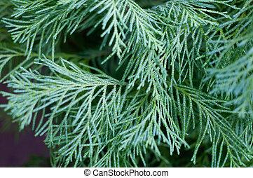 flora, bovenzijde, branches., blauwe , macrophotography, ...