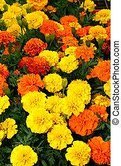 Flora Bright Yellow Orange Red Flowers
