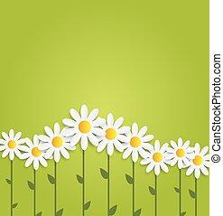 flora, daisyl, wektor, projektować, illustartion