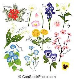 flora, komplet, collection., wektor, kwiat, 3.