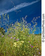 flora of Gran Canaria