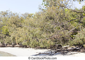 Flora of New Caledonia, details of a tree growing on the ...