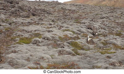Flora on shore of Arctic Ocean in Greenland.