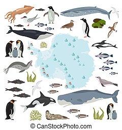 flora, seu, set., mar, antártica, elements., fauna, grande, ...