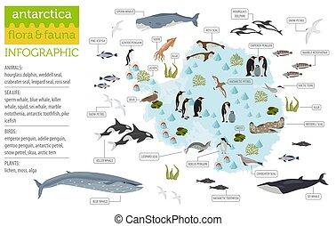 flora, tuo, set., mare, antartide, elements., fauna, grande, vita, antartico, collezione, infographics, mappa, uccelli, geografia, animali, costruire, appartamento