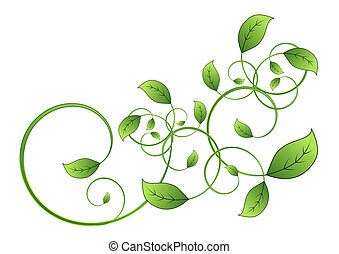 flora vine leaf isolated on white background