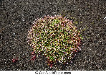 Flora - Wet green flora on Hawaii island