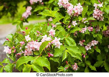 fleurs roses arbre floraison rose art floraison arbre photographie de stock. Black Bedroom Furniture Sets. Home Design Ideas