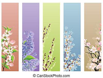 floraison, branches, collection