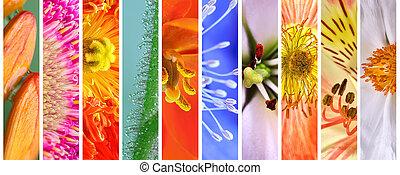 floral, été, ensemble, coloré, printemps