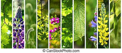 floral, été, ensemble, vert