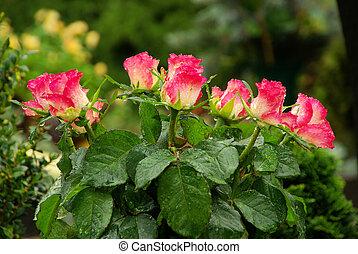 floral, 19, cimetière, arrangement
