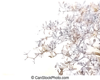 Close up dry leaves and branches over white for autumn season.