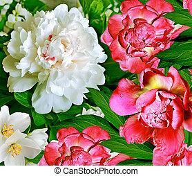 floral, achtergrond.