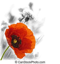 floral, amapola, diseño, rojo