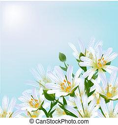 floral, arrière-plan., daisies.