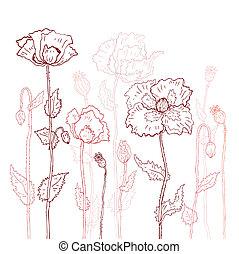 floral, arrière-plan., main, dessiné, coquelicots