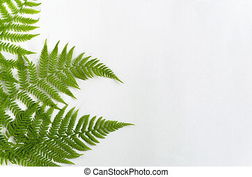 Floral background. Fern leaves on a white background