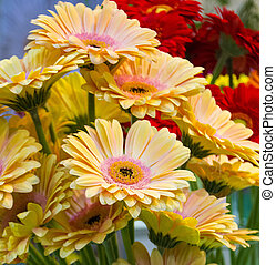 floral background flowers yellow gerberas