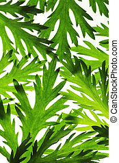 Floral background of green leaves over white