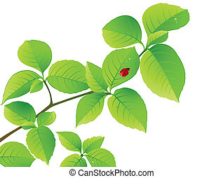 floral background with green branch and ladybird