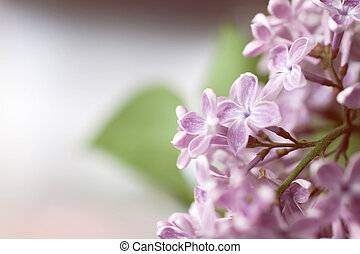 Floral background with lilac flowers