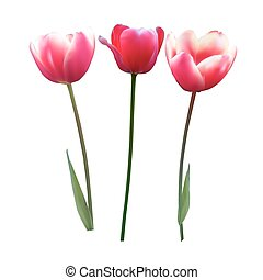Floral background with Tulips Vector Illustration