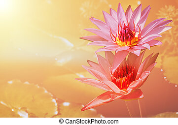 Floral background with water lilies