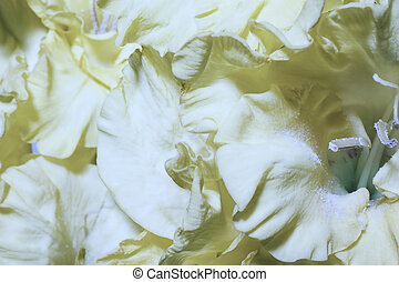 Floral background with yellow gladioluses